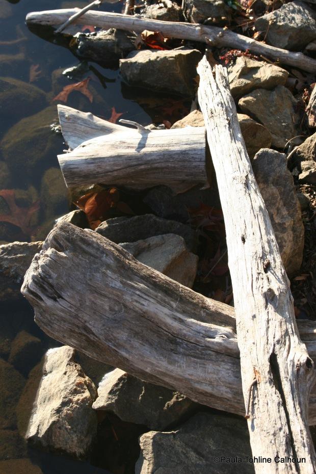 Driftwood on the shore of Lake Junaluska