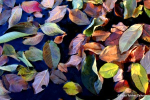 Fallen leaves scattered in bird bath