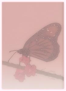 Queen Butterfly, Cypress Gardens, SC