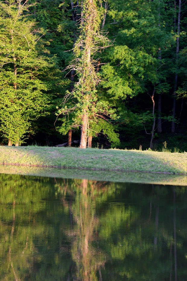 The Barn at Valhalla in Chapel Hill, NC was a gorgeous spot for the wedding, with this beautiful pond. . .