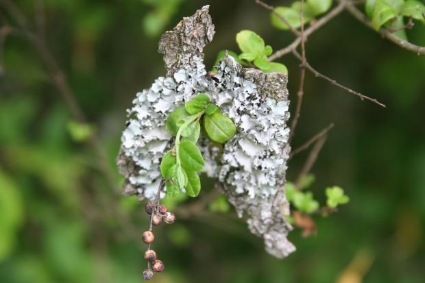 Interesting lichen growth, no?